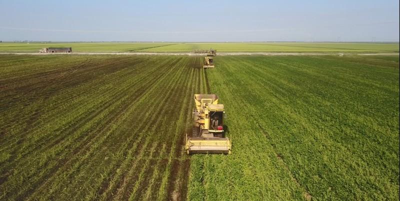 Florida-vegetable-crops.jpg