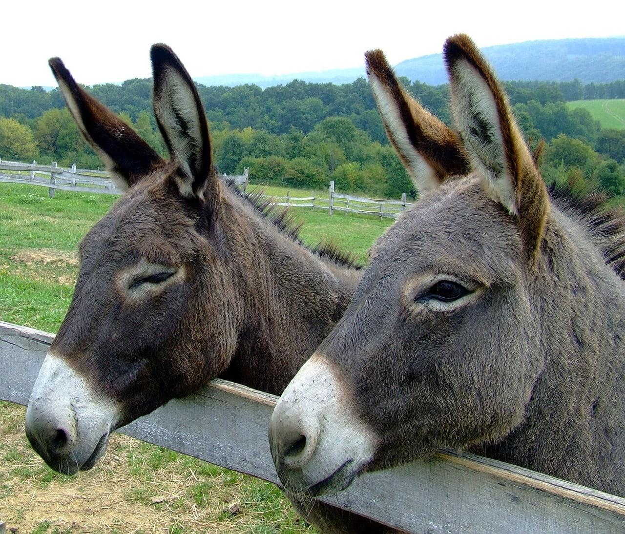 donkeys-105718_1280.jpg