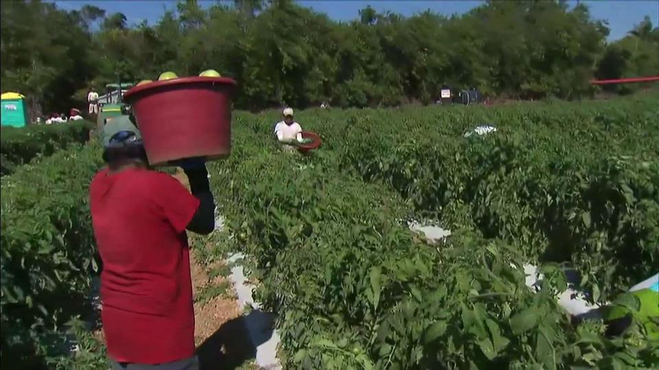 Florida-farmworkers-1.jpg
