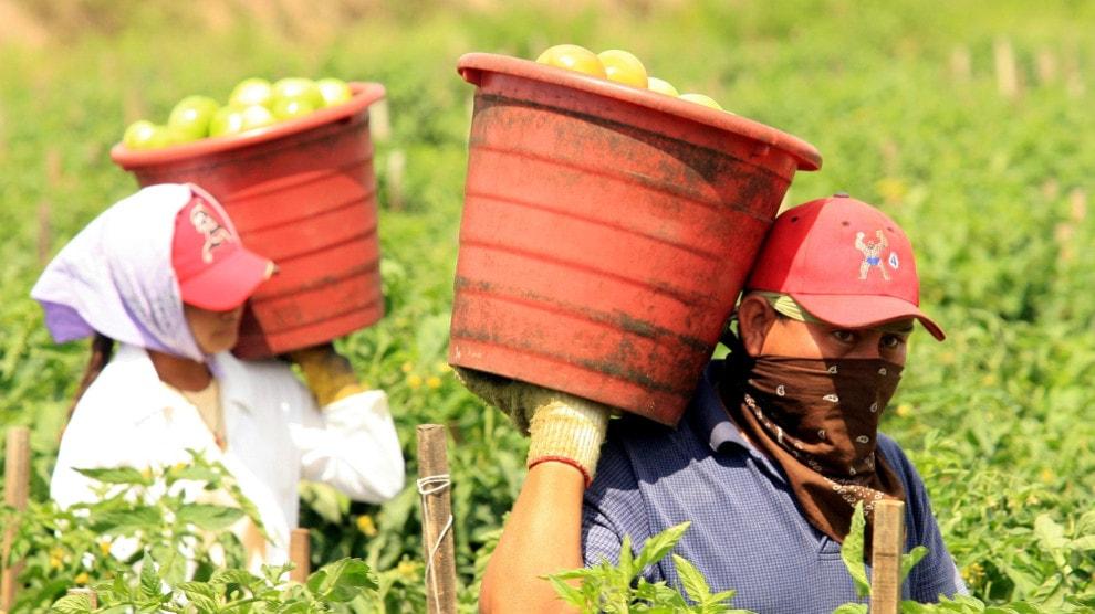 Florida-farmworkers.jpg