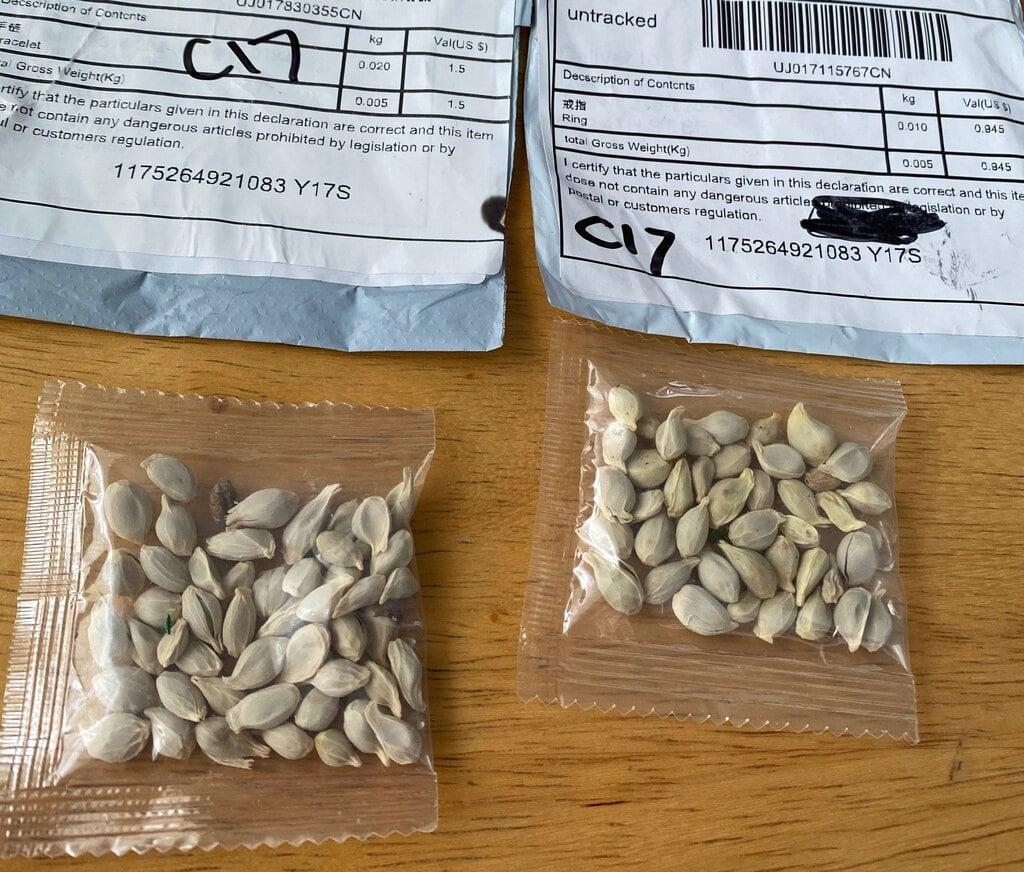 26xp-seeds-pix-jumbo.jpg