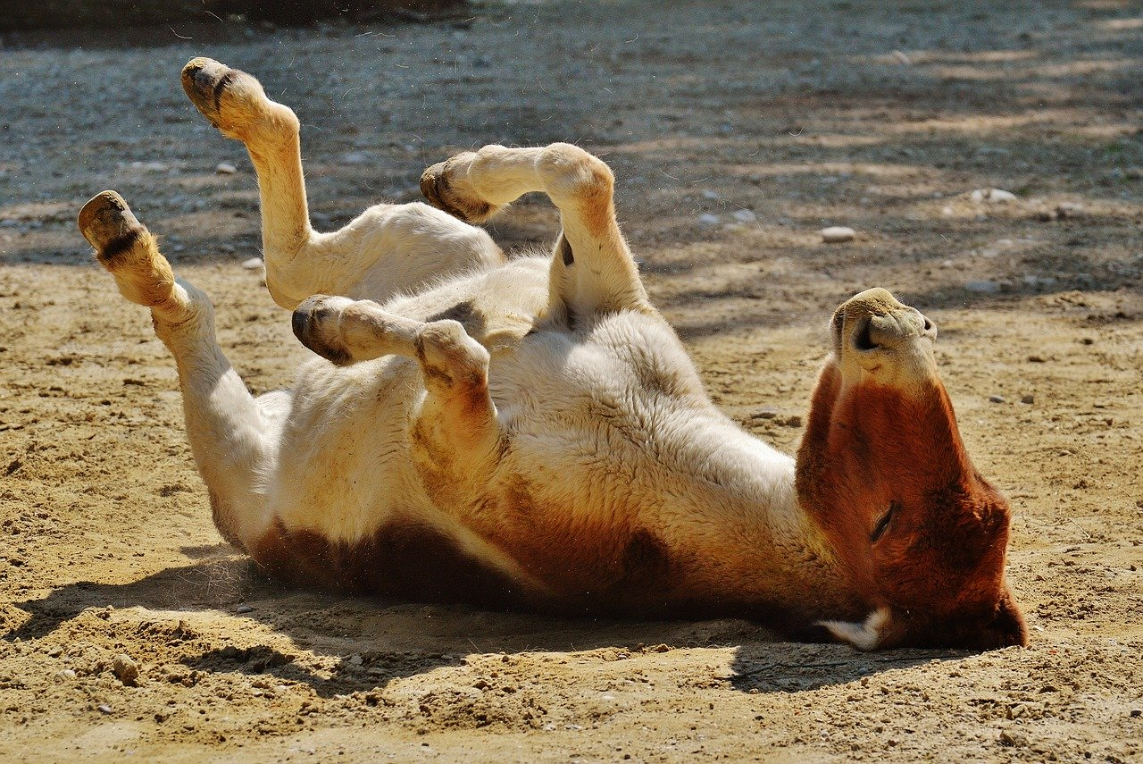 donkey-1342349_1280.jpg