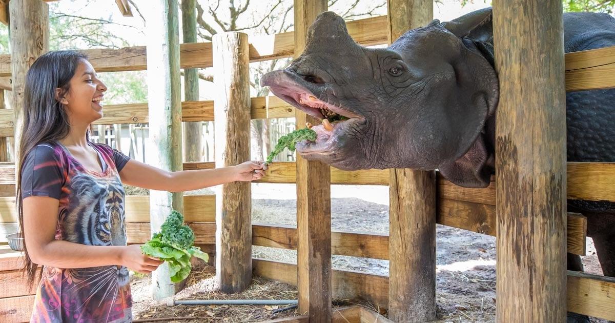 feed-rhino-zootampa-social.jpg