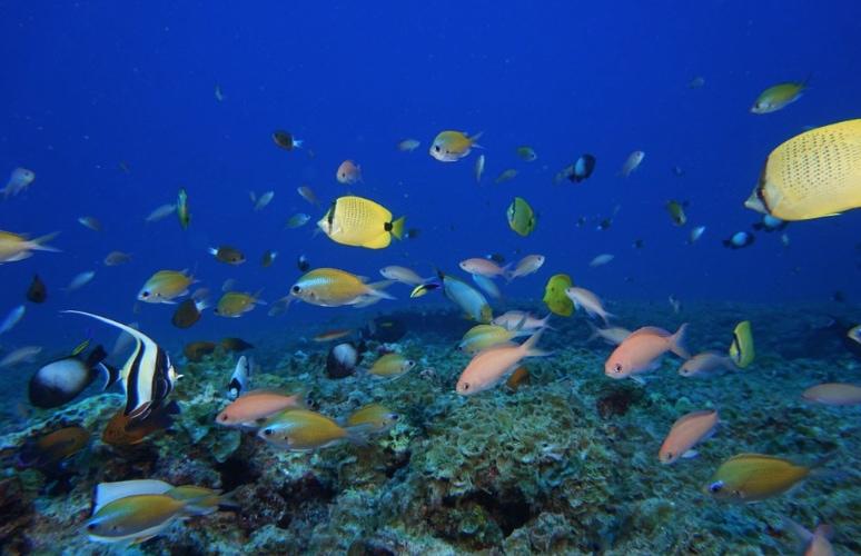 Coral-reef-in-Hawaii.jpg