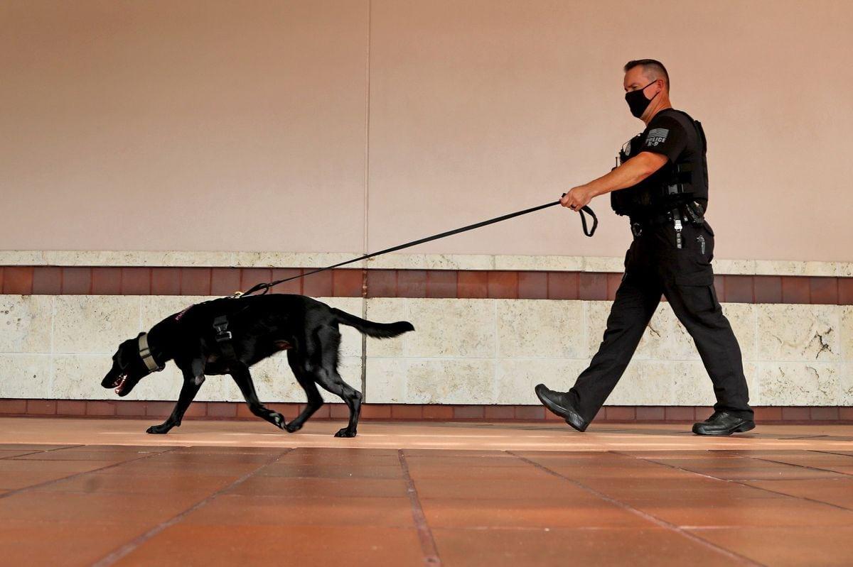 gun sniffing dog