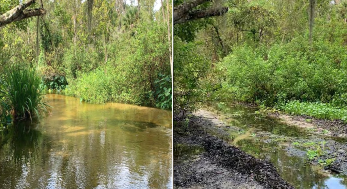 Little-Wekiva-River-before-and-after..jpg