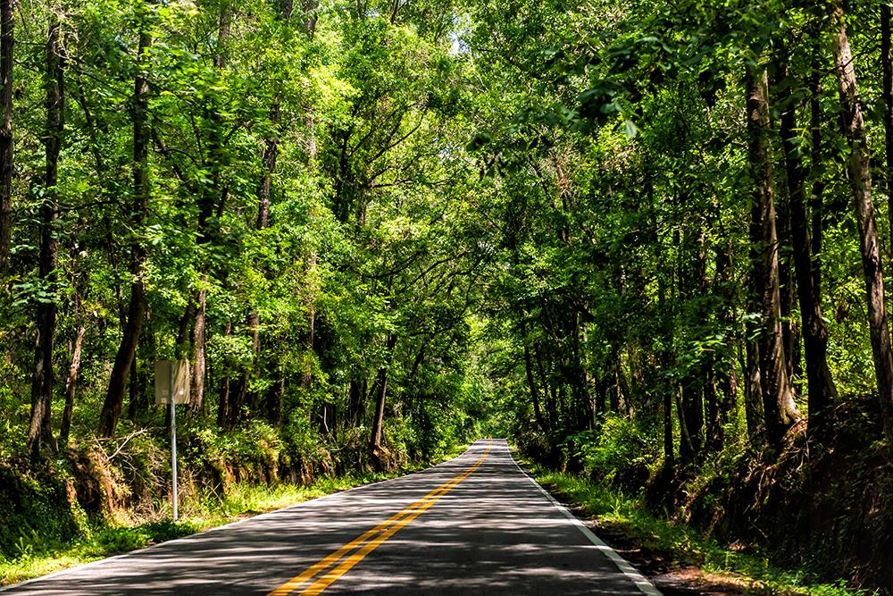 Tallahassee, USA Capital city miccosukee street scenic canopy ro