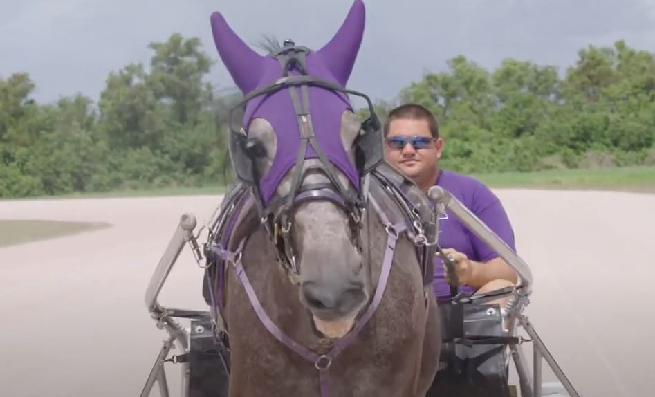 Standardbred-horse-racing.jpg