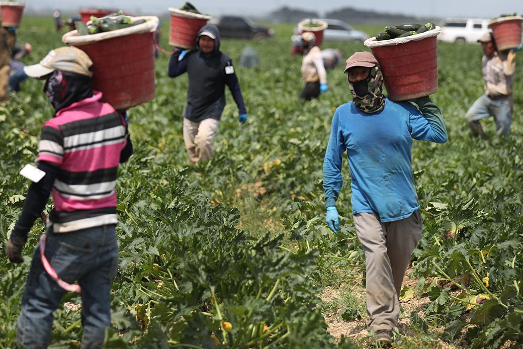 FarmworkersBrief
