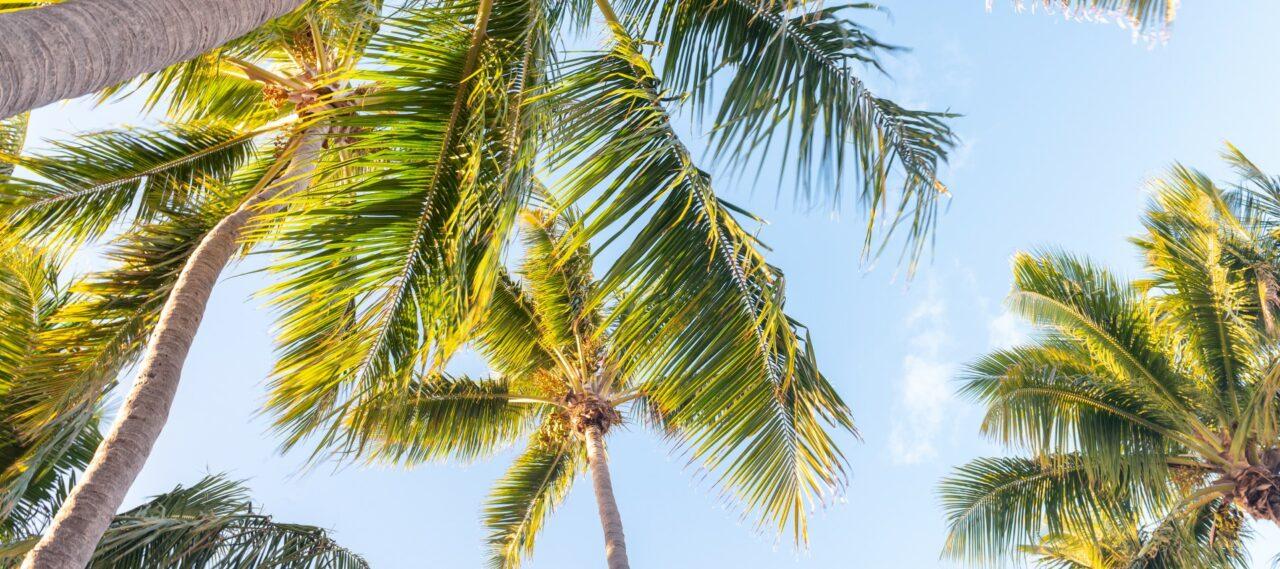 florida-air-quality-Large-1280x569.jpeg