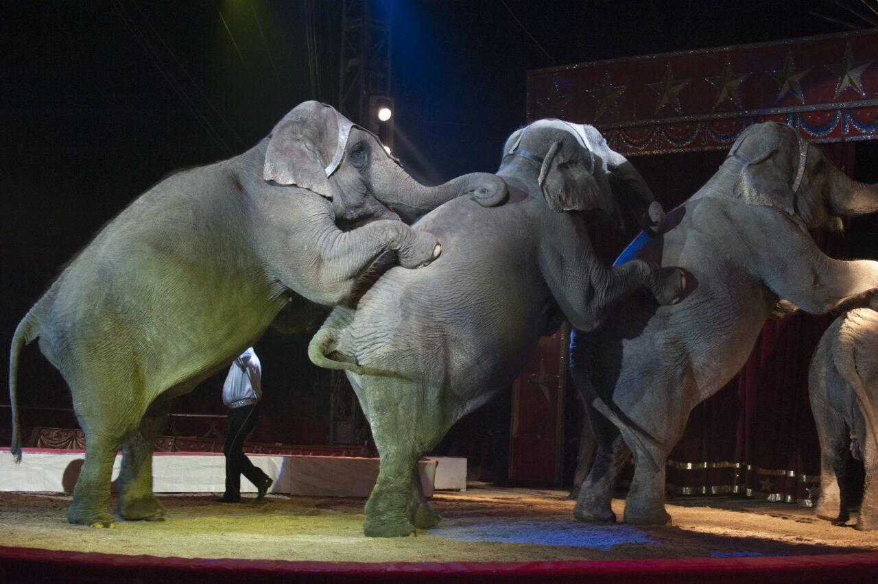 Elephants-Large-1280x852.jpeg