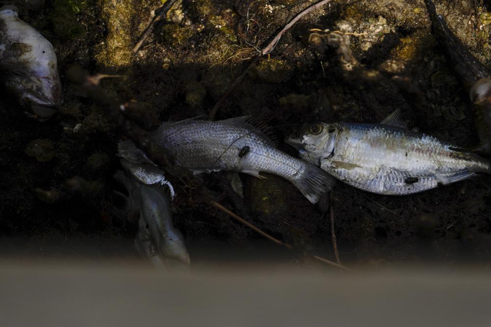 Fish-kill.jpeg