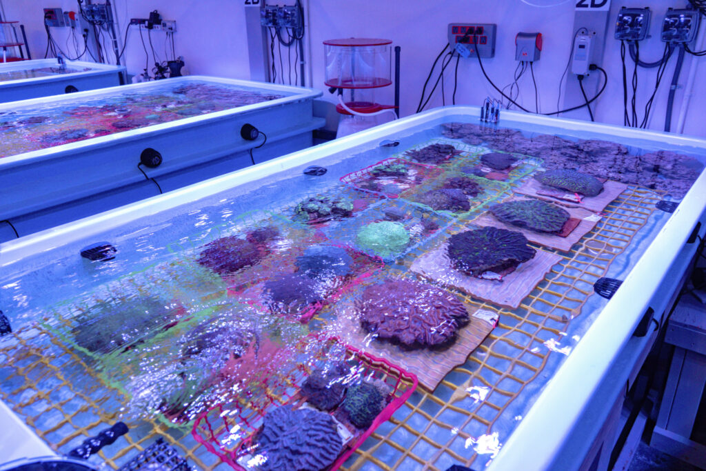 corals-at-coral-rescue-center-1024x683-1.jpg