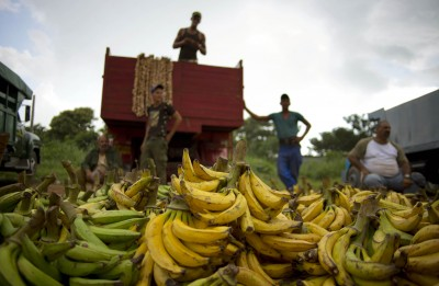 Florida growers worry about Cuban imports